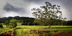 Country life - Hidden valley (dazza17 - DJ) Tags: trees seascape storm beach clouds rocks surf pano qld kira hdr rockpools currumbinvalley curumbin treesafterthestorm
