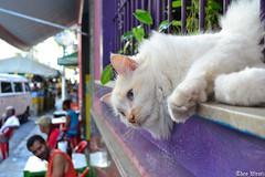 DSC_0042 (TheoWentz) Tags: street brasil nikon vitria gato rua theo wentz d3100 theowentz