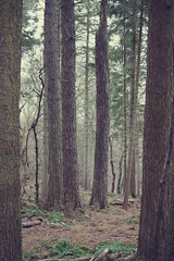The woods (Gondolin Girl) Tags: park wood trees tree nature forest woods glasgow parks linnpark