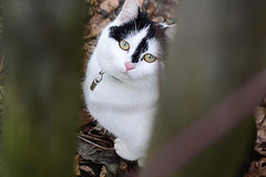 Katzenblick (Godwi_) Tags: cats katze augen zaun blick miau ktzchen tierbilder tierfotos miez miezekatze