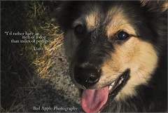 dog puppy mutt mix shepherd stock creative australian commons cc german paisley dogtography