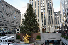 Picture Of 2012 Rockefeller Center Tree Which Was Lit On Wednesday November 28, 2012. Photo taken Sunday December 30, 2012 (ses7) Tags: christmas tree center rockefeller 2012