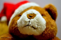 teddy bear ALWAYS WITH SWEET THOUGHTS (dimitra_milaiou) Tags: life bear new xmas city red white colour love colors beautiful smile greek happy nikon holidays moments teddy sweet d year joy hellas happiness athens greece health thoughts wishes 90 andros 2012 dimitra d90 2013       milaiou