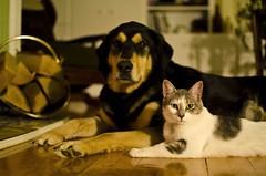 dogs and cats (gary's images @ studio g) Tags: dog love cat happynewyear dogsandcats loveisallyouneed allyouneedislove nikon35mmf18 nikond7000 ourdailychallenge bethegood