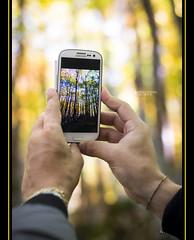 wood autumn trees boy sun man forest 50mm hands nikon... (Photo: samy_flickr on Flickr)