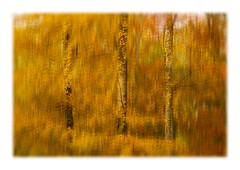 FOREST OF BERE (mark_rutley) Tags: autumn blur forest forestofbere