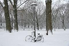 Onderlangs - Amsterdam (Netherlands) (Meteorry) Tags: park trees winter snow holland netherlands amsterdam bike bicycle highway europe hiver sneeuw january nederland ring east arbres neige bicyclette paysbas vélo est noordholland a10 oost watergraafsmeer stadsarchief meteorry betondorp 2013 onderlangs