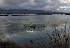 Nuvole e canne a Macchiareddu (RoLiXiA) Tags: sardegna landscapes sardinia natura sardaigne panorami stagno zoneumide nikond90 stagnodisantagilla