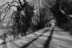Snow Track (Rovers number 9) Tags: uk trees winter snow cold tree minolta sony lancashire a65 2013 euxton uksnow minoltaaf28135mmf445 sonya65 jan2013