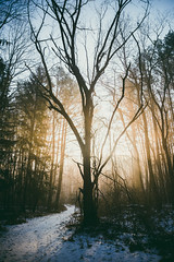 Morning Glow (.monodrift) Tags: morning trees snow fog forest path