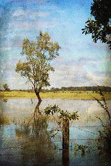 Water is the driving force of all nature. (MudMapImages) Tags: water flood australia nsw 2013