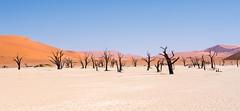 Daliesque (loveexploring) Tags: africa deadvlei namibdesert namibnaukluftnationalpark namibia claypan dead desert dry landscape surreal touristattraction tree treeskeleton vlei