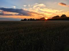 Wheat Field Sunset (Marc Sayce) Tags: wheat field sunset four marks hampshire sunbeams