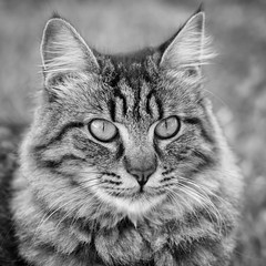 Nina (Piero Zanetti) Tags: animali bn canon135l gatti gattina giardino cat cats animals