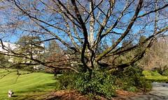 TriptoRoyalRoads01April2016(105) (gordhandford) Tags: royalroads colwood britishcolumbia 2016 spring