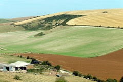 Glorious Sussex (Alan1954) Tags: sussex southdownsnationalpark england walking 2016