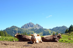 Gartnerkofel (Wolfgang Binder) Tags: mountains mountain alps view sky landscape nikon d7000 zeiss distagon distagont2825 gartnerkofel nassfeld carinthia hiking cows animals alm