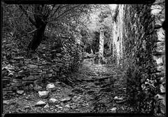 cevennes032 (salparadise666) Tags: nils volkmer busch pressman c 2x3 france landscape ruin village cevennes monochrome bw black white path wall tree fomapan 100 caffenol rs