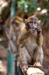 Marocco - Cascate Ouzoud (Valeria Conte (Fondi)) Tags: verde children ouzoud cascate persone tour viaggio travel nikond5100 nikon color marocco paesaggio allaperto formazione monkey scimmia eyes