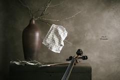 Lo que el viento no se llev (Ivannia E) Tags: stilllife naturalezamuerta naturemorte bodegn sepia cello violonchelo partituras ramassecas bal
