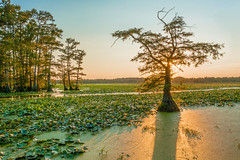 Walnut Log area at Reelfoot Lake ( David Gunter) Tags: walnut log reelfoot lake sunset rays
