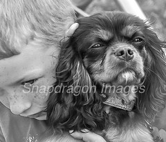 Puppy love (Snapdragon Lincs) Tags: beautiful loyal children lincolnshire bestfriend loving show agricultural epworth affectionate cute love boy owner pet dog puppy tan black spaniel charles king cavalier