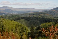 Achray Forest (robert55012) Tags: scotland trossachs achrayforest queenelizabethforestpark