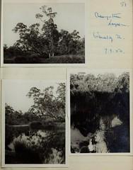 n82_w1150 (BioDivLibrary) Tags: 19191982 australia browngrahama browngrahama19191982 diaries ornithologists travel museumvictoria bhl:page=48115645 dc:identifier=httpbiodiversitylibraryorgpage48115645 grahambrown fielddiary geo:country=australia