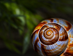 Mr. Snail (BBaranPhotography) Tags: snail animal golden ratio snails shell orange light beam macro red