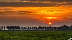 Setting Sun in the polder (BraCom (Bram)) Tags: bracom sunset zonsondergang trees dike bomen dijk farm boerderij akker field cloud wolk fog mist warm clouds wolken sun zon evening avond dirksland goereeoverflakkee zuidholland nederland southholland netherlands holland canoneos5dmkiii widescreen canon 169 canonef24105mm bramvanbroekhoven nl