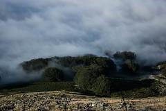 foggy mountains (Ombeline_v) Tags: landscape landscapes light foggy trees nikon nature france southoffrance clouds