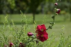 Changing directions (petrOlly) Tags: europe europa poland polska polen lodz nature natura przyroda garden inthegarden summer flower flowers blume blumen