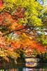 小橋、流水、紅葉 Kyoto Botanical Garden / Kyoto, Japan (yameme) Tags: travel japan canon eos maple kyoto 京都 日本 kansai 旅行 關西 楓葉 kyotobotanicalgarden 京都府立植物園 24105mmlis 5d3 5dmarkiii