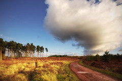 Cloud P0rn (Vemsteroo) Tags: trees winter light sky cloud nature pine clouds canon dark landscape countryside threatening cannock chase vista british awe f28 lseries 1635mm beautyinnature thewayforward