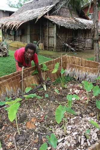 Soup soup gardens in Malaita, Solomon Islands. Photo by Wade Fairley, 2012.