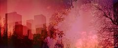 harborne (auspices) Tags: uk colour film 35mm soup birmingham exposure multiple olympusxa2 harborne richardpjlambertportfolioaugust