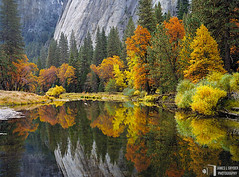 Autumn in Yosemite (James L. Snyder) Tags: california park morning autumn trees usa mountain painterly green fall water pool leaves yellow rock horizontal wall forest reflections river gold reflecting mirror golden early nationalpark still woods october shiny riverside natural smooth meadow peaceful atmosphere calm sierra foliage glossy pines shore valley yosemite riverbed granite mauve symmetrical serene redwoods yosemitenationalpark mountainside shallow soaring deciduous riverbank sierranevada 2008 monolith motionless tranquil sylvan balanced polished glassy towering yosemitevalley russet riparian mercedriver cathedralrocks undisturbed mariposacounty lustrous elcapitanmeadow