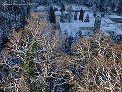 Waiting for Christmas (Arunte) Tags: trees winter italy mountain snow tree alberi forest italia tuscany neve toscana albero montagna appennino vallombrosa apennines marcofrancini arunte marcofranciniphotography