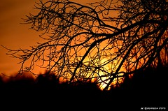 HolyNight (H. Eisenreich Foto) Tags: christmas xmas sunset orange sun tree silhouette night weihnachten evening abend ic nikon ast sonnenuntergang nacht horizon hans holy sonne baum horizont heilige zweig hoizon schmidmhlen eisenreich mygearandme