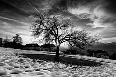 marry christmas to all my flickr friends! (gregor H [PRO EX]) Tags: winter sunset snow tree landscape austria valley rheintal vorarlberg viktorsberg