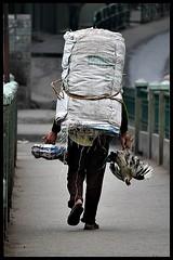 Walking Chicken (Midhun Manmadhan) Tags: street work photography walk sikkim gangtok manwithchicken