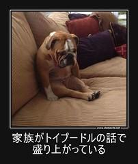 家族がトイプードルの話で盛り上がっている #ペット #犬 #ソフトバンク (Demochi.Net) Tags: life cute sexy japan fun japanese motivator culture 日本 ペット 猫 demotivator 金 家族 結婚 ゲイ 女 子供 おっぱい 愛犬 政治 社会 巨乳 文化 眼鏡 教育 demotivators 経済 女性 初恋 r18 女子 カップル 子猫 女装 お笑い motivators 会社 少子化 企業 ユーモア 恋 悪い 格差 風刺 一言 デモチ 大喜利
