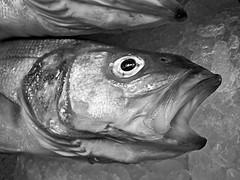 #.06° martedì (UBU ♛) Tags: portrait blancoynegro water noiretblanc ritratto biancoenero kodakeasysharem1033 ©ubu unamusicaintesta luciombreepiccolicristalli