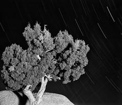Joshua Tree - California (Randy Babajtis) Tags: california longexposure nightphotography camping film night stars dessert nationalpark joshuatree startrails fujineopan100 fujigf670