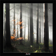 Light (Jabi Artaraz) Tags: light color luz nature europa europe sony natura bosque zb bizkaia euskalherria beech basquecountry haya buche paysbasque argia abeto basoa pagoa digitalcameraclub euskoflickr superaplus aplusphoto flickrdiamond jartaraz alfa350 mybilbaobizkaia tufototureto abetoa