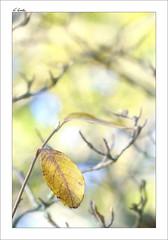 DC Bokeh (A.González) Tags: blue autumn naturaleza tree hoja nature yellow azul hojas arbol dc leaf nikon bokeh amarillo árbol otoño leafs rama 135mm ramas d90 nikonistas angelgonzalez agiz3