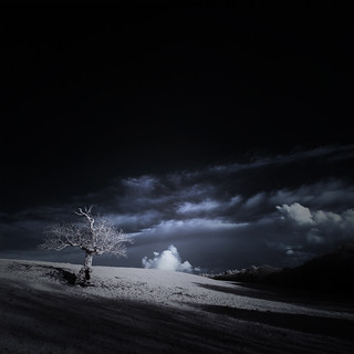 ѱ Tree 1ƒ infrared