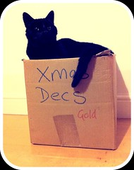 Christmas is over :-( (Richard 120) Tags: christmas xmas decorations night cat gold box cardboard bovril twelfth uploaded:by=flickrmobile flickriosapp:filter=nofilter