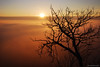 Sunrise like no other (.:: Maya ::.) Tags: city tree clouds sunrise town bulgaria plovdiv облаци красота дърво българия магия град изгрев пловдив альоша mayaeye mayakarkalicheva маякъркаличева