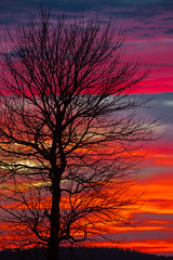 Color Tree (O.Schmidt2012) Tags: trees winter sunset color tree nature clouds canon germany landscape eos thringen sonnenuntergang natur wolken thuringia dslr landschaft wald bume baum farben frauen lightroom rennsteig thringerwald frauenwald distagont235 canon5dmkiii canonef70300lis